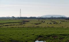 IMGP8065 (mattbuck4950) Tags: england unitedkingdom europe somerset northsomerset railways farms february visitswithmumdad disusedrailways yatton 2019 strawberryline gbr