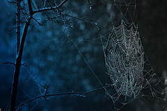 (: Once in a blue moon :) (Creative Bling) Tags: goth gothic web spiderweb londonontario darrellcolby