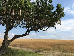 IMG_1563 (suuzin) Tags: masai mara safari