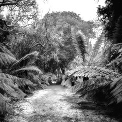 a re process from Kilmacurragh (Wendy:) Tags: ir infrared hitech prostopndir6 730nm kilmacurragh mono ferns foliage