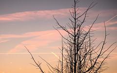 Zonsopkomst 18012019 1 (megegj)) Tags: gert zonsopkomst sunrise