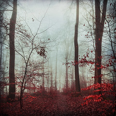 one of these days (Dyrk.Wyst) Tags: winter wuppertal backlight beechtrees fog foliage forest hike humid landscape mood nature outdoor path rain mystical moody textures trees wet