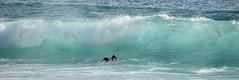 Ce jour là, j'ai rêvé : avoir 20 ans de moins et attendre la vague, comme cette jeune femme ... Ou  plonger dans cette transparence !😊That day, I dreamed: to be 20 years younger and wait for the wave, like this young woman ... (jmollien) Tags: portugal algarve ocean atlantique vague surf surfeur trip sport transparence bleu blue vert green beautiful turquoise waves
