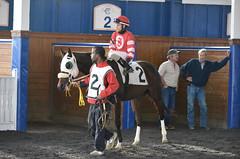 "2016-11-06 (2) r5 Jevian Toledo on #2 Great Smoke (JLeeFleenor) Tags: photos photography md marylandhorseracing maryland marylandracing laurelpark jockey جُوكِي ""赛马骑师"" jinete ""競馬騎手"" dżokej jocheu คนขี่ม้าแข่ง jóquei žokej kilparatsastaja rennreiter fantino ""경마 기수"" жокей jokey người horses thoroughbreds equine equestrian cheval cavalo cavallo cavall caballo pferd paard perd hevonen hest hestur cal kon konj beygir capall ceffyl cuddy yarraman faras alogo soos kuda uma pfeerd koin حصان кон 马 häst άλογο סוס घोड़ा 馬 koń лошадь outside outdoors"