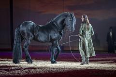 Frédéric PIgnon (jean-louis21) Tags: cheval passion horse noir black spectacle