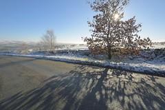 Roadside (Tony Tooth) Tags: nikon d7100 sigma 1020mm wideangle tree shadow winter cold sun sunny wintersun road roadside snow snowy wintry gunhill meerbrook staffs staffordshire staffordshiremoorlands