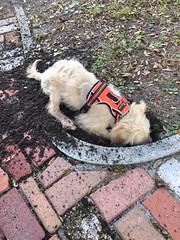 Harper digging for a bone