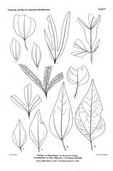 beitrgezurpal02wien_0197 (kreidefossilien2) Tags: velenovský bohemiancretaceousbasin bohemian czech republic palaeobotany flora kieslingswalde