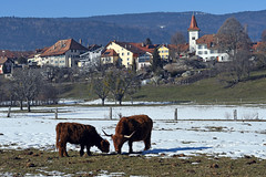 Vaud, Switzerland (photoriel) Tags: gimel vaud switzerland winter village nature landscape country snow worldtrekker