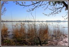 BORDEAUX : Bords de Garonne (Les photos de LN) Tags: paysage garonne berges rives roseaux bordeaux parempuyre nouvelleaquitaine gironde lumière brume