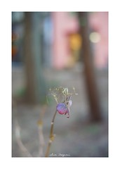 2019/1/20 - 6/9 photo by shin ikegami. - SONY ILCE‑7M2 / Voigtlander NOKTON CLASSIC 40mm f1.4 SC VM (shin ikegami) Tags: asia sony ilce7m2 sonyilce7m2 s7ii 40mm voigtlander nokton nokton40mmf14sc tokyo photo photographer 単焦点 iso800 ndfilter light shadow 自然 nature 玉ボケ bokeh depthoffield naturephotography art photography japan earth