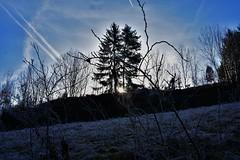 DSC_0660 (mélanie mathevon (mystery)) Tags: soleil levé gelée blanche arbre prairie matin ardèche