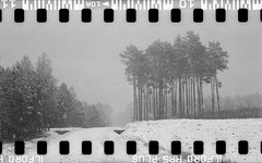 Bronica SQ-A-060-007 (michal kusz) Tags: bronicasqa zenzanon 110 135 35mm 120to135 frame film bw blackandwhite landscape forest format monochrome medium monochromatic trees snow poland