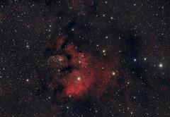 SH2-171 (sergiy.vakulenko) Tags: astronomy astrophotography astrophoto deepsky dso space sky stars nebula ed80 qhy8 sh2171 ngc7822