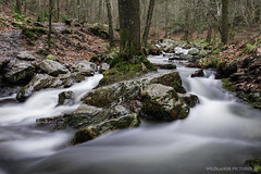 I s l a n d   T r e e (Crofter's) Tags: water waterfall watertrails waterfalls stream green leaves moss forest forestofmarch times frozentimes trees tree walkingthroughtheforest walk white deepwhite shadows longexposure ndfilter tripod sony sonya sonyalpha sonyalpha77ii sony1650 sony1650mm wildlands wildlandspictures