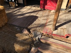 Bonnie Springs, Red Rock Canyon (jericl cat) Tags: shooting gallery shootn closed broken cowboy showgirl animatronic bonnie springs ranch redrock canyon desert oldnevada attraction roadside park theme wood plank sidewalk hay red rock western land