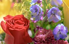 Bouquet (Carl Cohen_Pics) Tags: flower rose flora bouquet floralarrangement red blue nature bloom sigma sigma105mmf28exdgoshsmmacrolens canon canon7dmarkii macro macrophotography