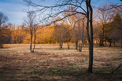 Fox Meadow Illuminated by the Setting Sun (John Brighenti) Tags: outdoors outside nature rachelcarson conservation park montgomery county evening woods forest rural alone solitude quiet peace sony alpha a7rii ilce7rm2 tamron 2875 nex femount emount ilce bealpha sonyshooter lens wide zoom trees sunset sun setting sundown dusk light orange red yellow sky blue field meadow fox grass spring