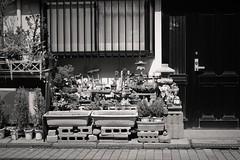 Front door garden (Bill Morgan) Tags: fujifilm fuji xpro2 35mm f2 bw jpeg acros alienskin exposurex4