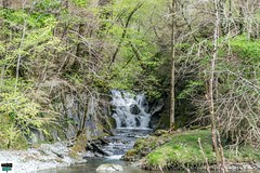 Cascade (https://pays-basque-et-bearn.pagexl.com/) Tags: 2019 64 aquitaine avril béarn colinebuch france daspe foret montagne nature paysage pyrénées pyrénéesatlantiques vallée aydius