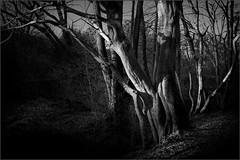Spot light (Eva Haertel) Tags: eva haertel natur nature landschaft landscape woodland forest wald bäume strees kahl bare baumstamm trunk light licht schatten shadow atmosphäre atmosphere schwarzweis sw blackandwhite bw