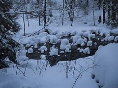 SchneeHäupchen (Panasonikon) Tags: panasonikon nikone2000 winter schnee snow harz landschaft landscape bach fluss wald forest coolpix2000 nikon river mc monochrome