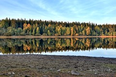water reservoir Láz (Michal Ritter) Tags: czech czechrepublic nature nikon landscape autumn forest reflections bohemia brdy yellow colors country protected water