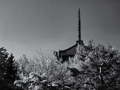Above the trees (Tim Ravenscroft) Tags: pagoda trees sky shinnyodo woodland wood temple kyoto japan hasselblad hasselbladx1d monochrome blackandwhite blackwhite