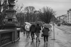 Blöteborg (Rudi Pauwels) Tags: 2019onephotoeachday goteborg gothenburg bloteborg sverige sweden schweden raining rain umbrellas wet wetreflections avenyn kungsportsbro inomvallgraven svartvit blackandwhite