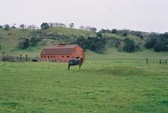Rural California (poavsek) Tags: zoom minilux analog california rain green oaks leica film rural horse vultures barn