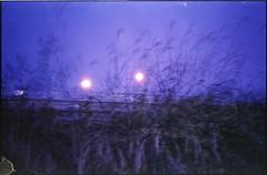 (✞bens▲n) Tags: contax g2 konica centuria super 400 carl zeiss 3570mm multiexposure moon moons grass evening dark film analogue