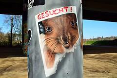 "🐇🐰 ""Wanted Rabbit"" - Niddapark, Frankfurt - [GERMANY] (Vagabundler) Tags: streetart mainhattan frankfurt niddapark graffiti graffitiart ffm streetartfrankfurt urbanexploration art🎨 frankfurtdubistsowunderbar urbanart dailygraffiti storyofthestreet streetartiseverywhere vagabundler rabbit spraycanart thankgoditsfrankfurt streetartistry murales frankfurtammain wallart streetartglobe streetlandgraffiti graffitiofourworld urbanwalls graffitiwall globalstreetart grafflife"