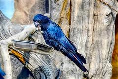 Arakakadu (marc.jo71) Tags: orte europa deutschland natur berlin zoologischergarten gärten zoo