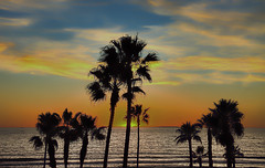 Green Flash Sunset (rod1691) Tags: greenflash sunset beach oceanside california surf sand palms clouds