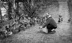 Barnard Castle . (wayman2011) Tags: colinhart fujifilmxe2s fujifilmxf35mmf2 lightroom5 wayman2011 bw mono rural people ducks pennines dales teesdale barnardcastle countydurham uk