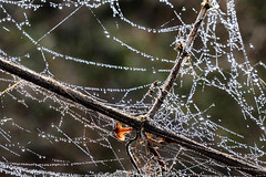 Day #4071 (cazphoto.co.uk) Tags: details nature 2019th14 backlit treasurehunt2019 branches cobweb dew droplets galleywoodcommon project365 beyond4018 020219 panasonic lumix dmcgx8 panasonic1235mmf28lumixgxvarioasphpowerois