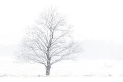 Tree on a stormy day (ambar.saha) Tags: winter storm stormyday tree deadtree white snow snowstorm ice connecticut ct newengland rockyhill usa march cloudy snowfall weather landscape landscapephotography forest