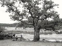 Bretagne, France (bobbykwibus) Tags: blackandwhite zwartwit tree boom natuur nature people landcsape landschap frankrijk bretagne eik oak