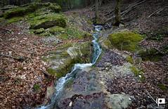 Žumberak (Ivica Pavičić) Tags: žumberak croatia creek mountaincreek green greenworld mountains nature ambiental forest