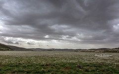 Dark skies over white fields (Hani Kaddumi) Tags: nikon d7200 sigma 180350 mm f18 art landscape jordan spring wild flowers mountains clouds rainy cold white