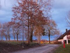 ....angeleuchtet..... (elisabeth.mcghee) Tags: abendrot abendhimmel abendsonne sunset sonnenuntergang himmel sky wolken clouds unterbibrach bäume trees wald forest oberpfalz upper palatinate landschaft landscape