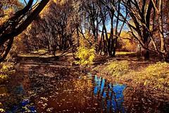 Autumn landscape (prokhorov.victor) Tags: пейзаж природа осень деревья пруд отражение