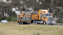 Bowning Turn (1/3) (Jungle Jack Movements (ferroequinologist)) Tags: western star constellation pacific formwork hume k104 kenworth transport yass haulage bowning nsw new wales australia highway freeway hp horsepower big rig haul freight cabover trucker drive carry delivery bulk lorry hgv wagon road nose semi trailer deliver cargo interstate articulated vehicle load freighter ship move roll motor engine power teamster truck tractor prime mover diesel injected driver cab cabin loud rumble beast wheel double b k200 maddens harden lennons step deck