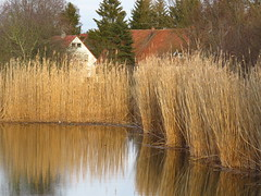 at pond (germancute) Tags: outdoor nature winter thuringia thüringen landscape landschaft germany germancute deutschland teich park pond