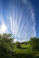 *** (Woodmen19) Tags: russia kirovregion nature flora plants trees shrubs summer june 2017 sky clouds light travel counrtyside landscape forest wood meadow мсзенитарн