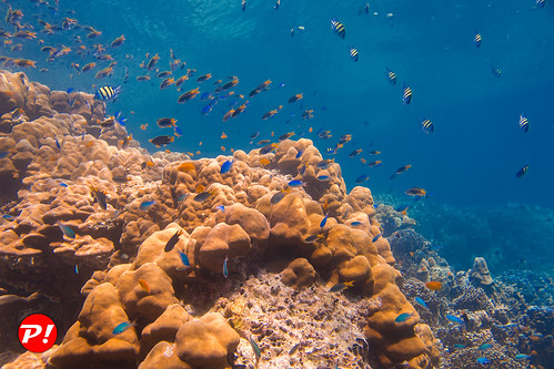 Underwater world. Coral reefs of Thailand         IMG_3470BS