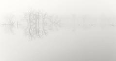silence (IIIfbIII) Tags: fog fotografie nebel foggy naturephotography nature wild landscapephotography landschaft trees lake winter wasser see mv mecklenburgvorpommern