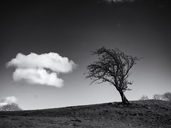 Cloud and Tree (Feldore) Tags: yorkshire west witton landscape tree cloud sky england minimal minimalistic feldore mchugh em1 olympus 1249mm stark