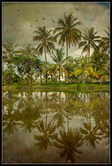Palm Tree Reflections (ulli_p) Tags: asia art artofimages aworkofart canoneoskissx5 flickraward isan landscape lake nature palmtree palmtrees reflection ruralthailand thailand texture textured texturedphoto