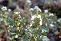 Growing (Chris Goodacre) Tags: neewer32mmf16lens sonya6000 chrisg35mm photoscape manualfocuslens